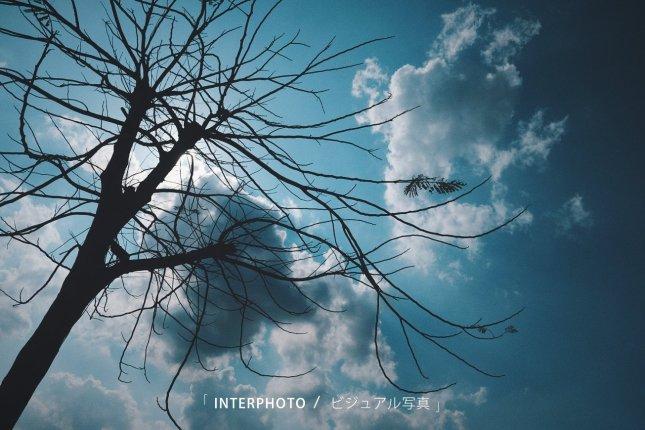 interphoto_15501609915663078492416161412241.jpg